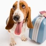 La segmentazione del mercato turistico pet friendly e la sua crescita costante