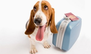 vacanze pet friendly turismo cane